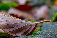 leaf in outumn